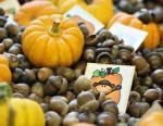 Differentiated October Sensory Fun in Kindergarten